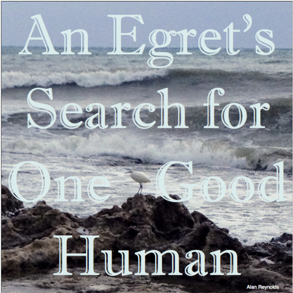 An Egret's Search for One Good Human